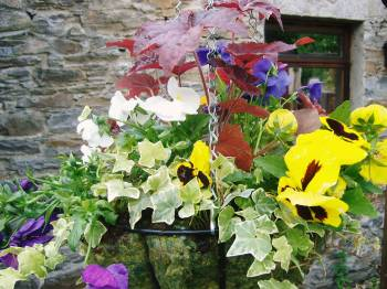 Summer hanging baskets available