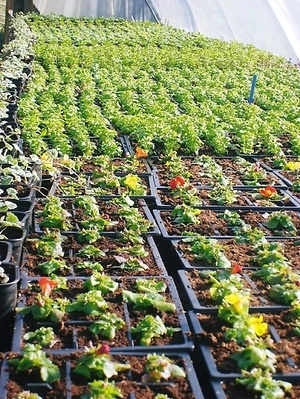 Your local plant nursery supplying all your planting needs!